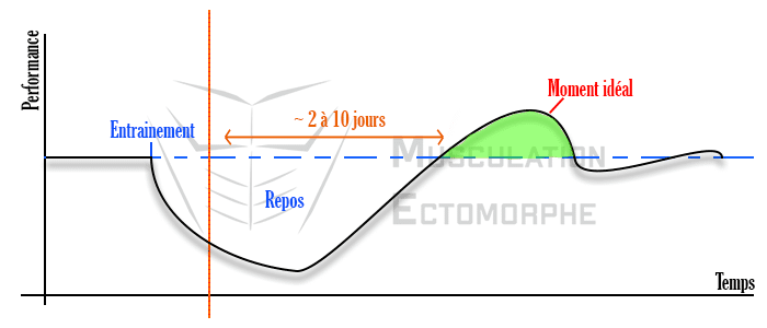 phénomène surcompensation musculation récupération graphique