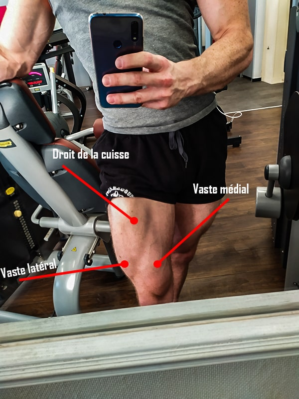 anatomie muscle jambe quadriceps musculation