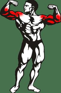 échauffement musculation haut du corps bras épaules