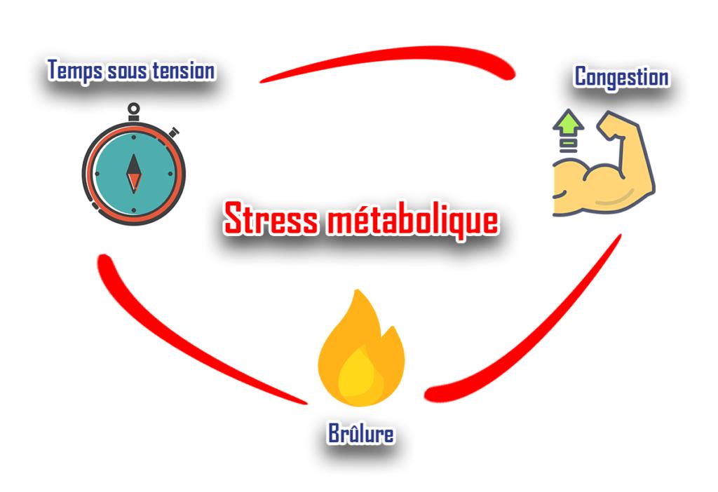 stress métabolique congestion brulure temps sous tension musculation